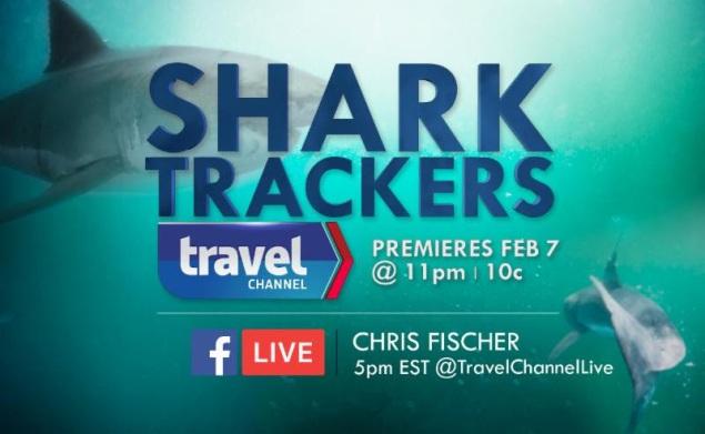 shark-trackers